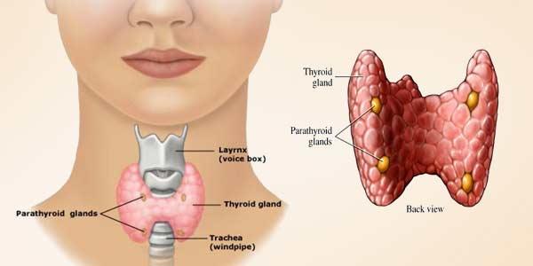 Brittle Toenails & Fingernails Signs, Causes,Treatment-Thyroid ...